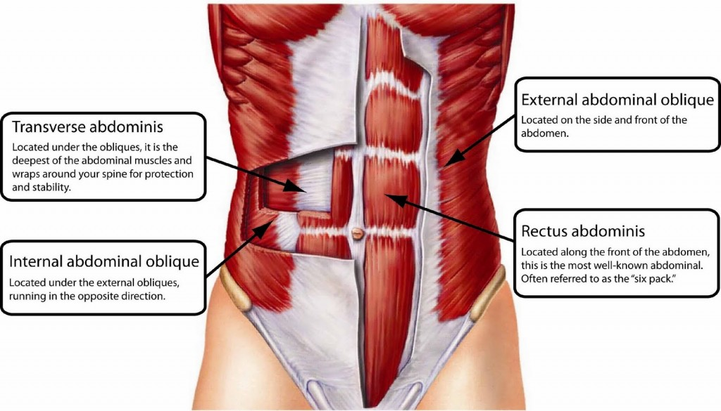 abdominal-muscle-wikispaces-danceguadagno