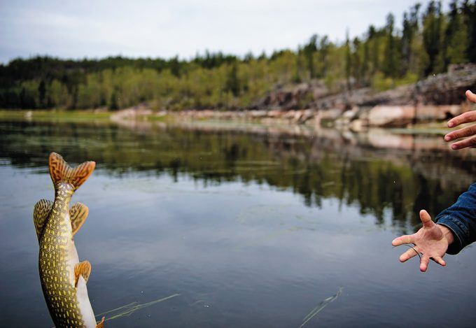 Northern Pike from Canada's Northwest Territories