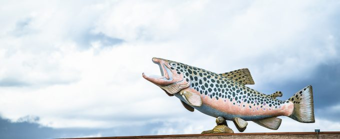 A large roof-top brown trout.