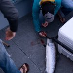 Shawna Hengel removes a lure from a farm raised Atlantic salmon, caught in Deepwater Bay, directly behind the failed Cooke Aquaculture net pen. It was her second salmon ever caught and the largest of the evening at 13 pounds.