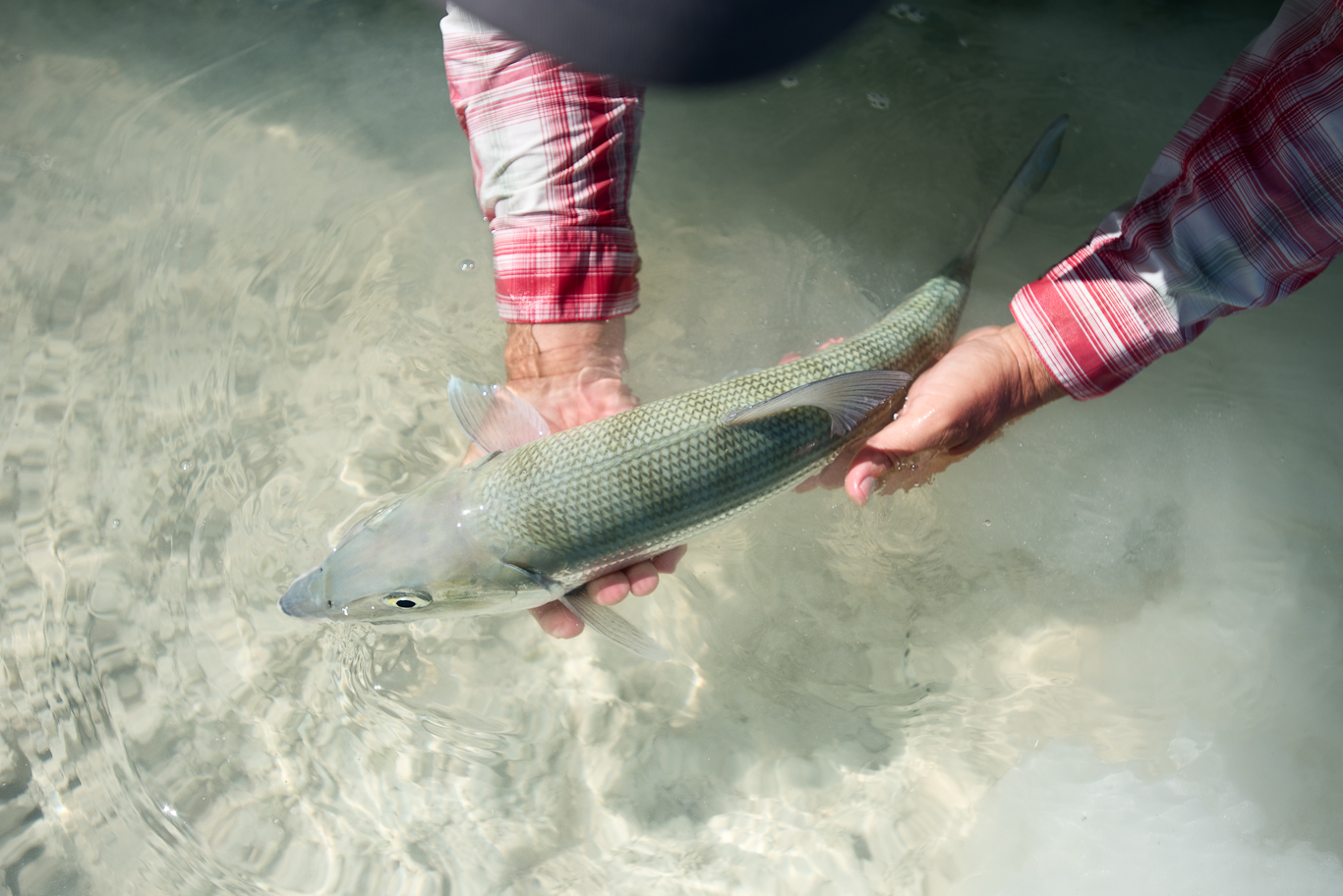 Bonefish, Bahamas, South Andros, Flyfishing