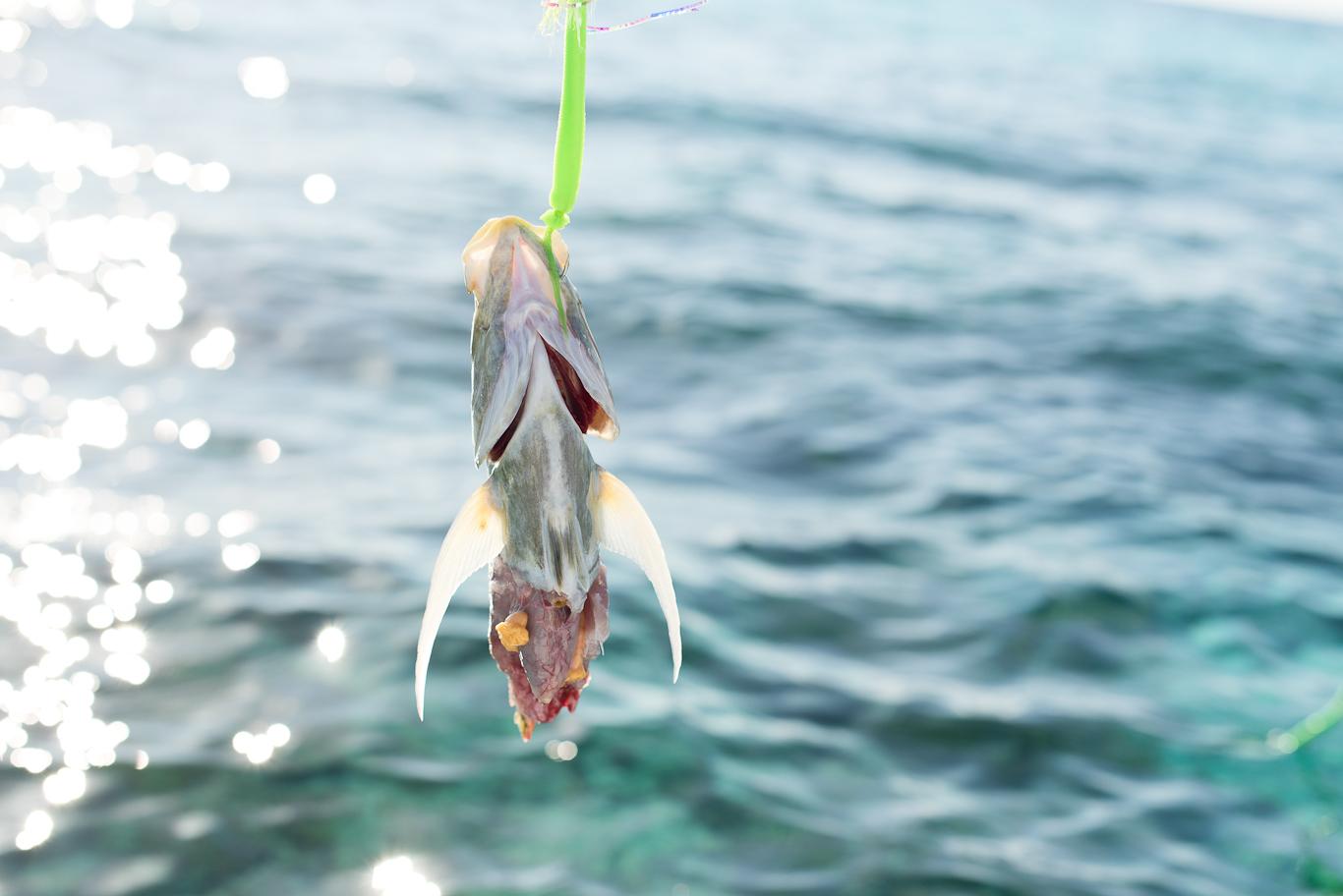 Jack, Flyfishing, Bahamas, Flyfishing, South Andros