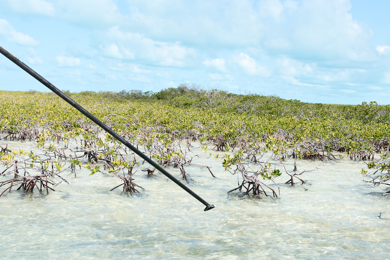 Bahamas, Flyfishing, Push Pole, South Andros,
