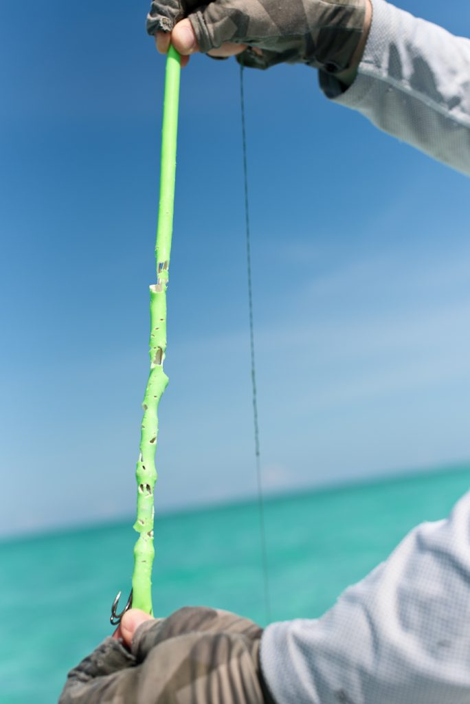 bahamas, south andros, barracuda, flyfishing